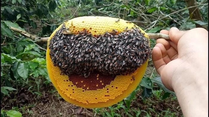 mat-ong rung